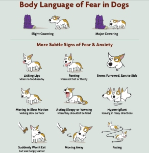 signals in dogs